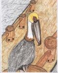 pelican - 12